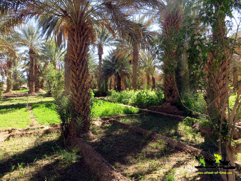 wüsten und oasen klasse 7